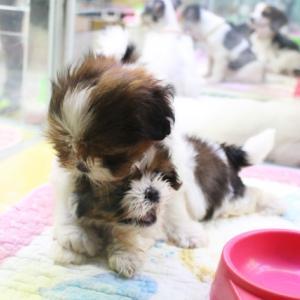 ピースワンコ・ジャパン「犬の殺処分ゼロ」で、また週刊新潮の暴露記事