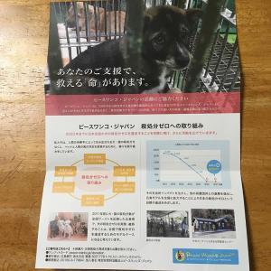 ピースワンコ・ジャパン様からのお手紙-保護犬に不妊手術は必須なのか?