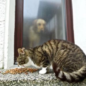 2018年も犬の飼育数は微減でした−猫さんに完敗です