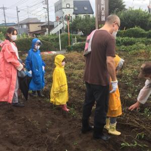 昨日のジャガイモ掘り その時間だけ雨が上がり薄日も差しました!