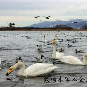 猪苗代湖撮影会