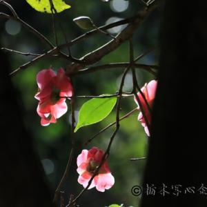 NHK文化センター水曜日教室「大柿花山」撮影