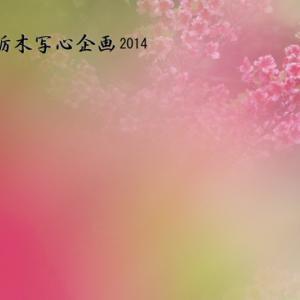 NHK文化センター日曜日教室「八方ヶ原」撮影