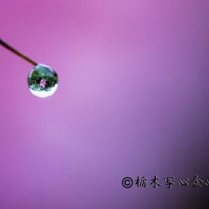 フォト・スーリールさんと「井頭公園」撮影