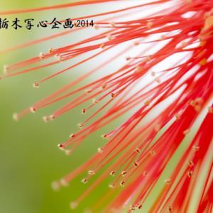 花之江の郷撮影会