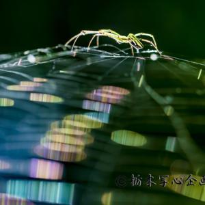明日から出来る蜘蛛の糸撮影解説