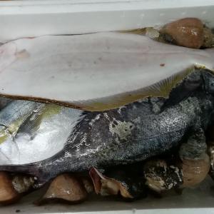 佐渡より天然鮮魚入荷‼️