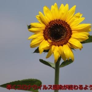 4月1日北海道コロナ感染者5名増