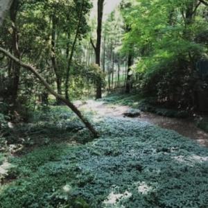 森林なう 〜 2ヶ月ぶりのお出かけ( ̄ー ̄人)
