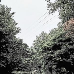 森のカメラサークル〜( ̄ー ̄)🐦