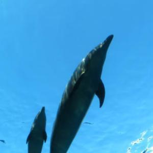 八景島シーパラダイスを遊びつくせ!(最終回)イルカの空