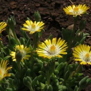 春だしね!綺麗な花を植えよう!