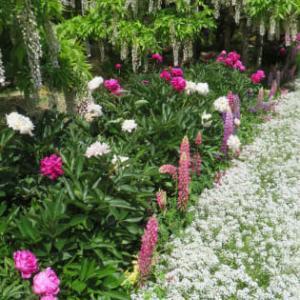 花を見ながらいっぱい歩こう!あしかがフラワーパークに行くぞ!(その4)