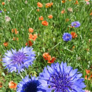 もっと広さと花を満喫しよう!東武トレジャーガーデンに行こう!(その3)