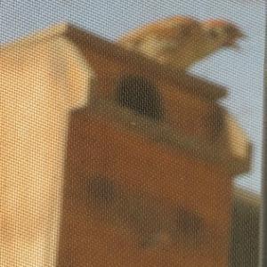 ベランダの巣箱はスズメの縄張りだ~!