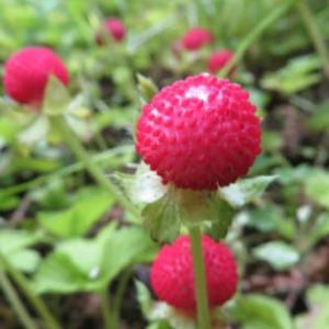 ガーデニングで庭を居心地よくしよう!
