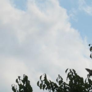 超晴れた日には、空を超見上げよう!