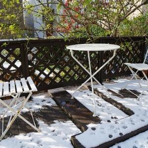雪が降りました~。