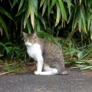 🐈久しぶりに登場…多摩川猫シリーズ