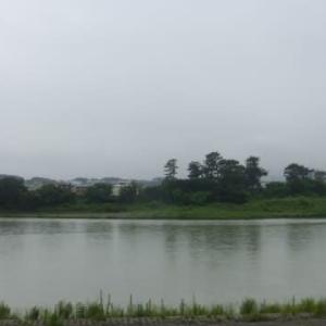 長雨の日々が懐かしい?…多摩川夏景色シリーズ