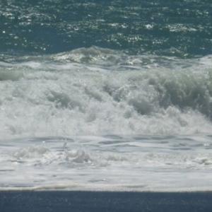 大波も大勢いればこわくない?…お盆休みの水難事故