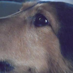 『 今日は 犬の日です。アレクサに教えていただき 一つ利口になりました。。。。』