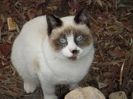 【 IQ(知能指数)が高い猫だった。。。。】 タヌパン 楽しかったな。。。
