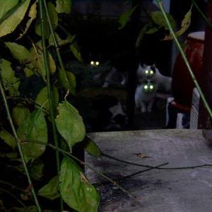 「猫の目が 闇に光る 別世界」  猫川柳