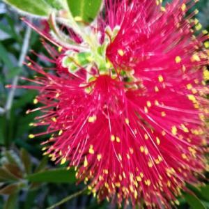 『 花は~~花は咲く。。。。コロナがあろうが地震があろうが。。。。』