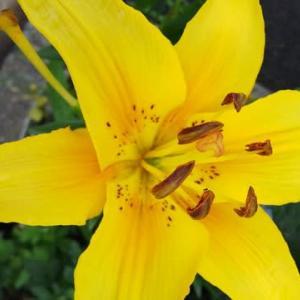 【  さあ~~月曜日だ。今日も始まるぞ~~~。】 『 花は咲く 歩く道端 足軽く 』 花咲き川柳