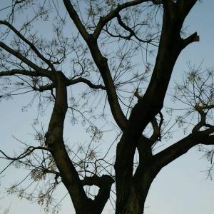 < 大きな木から落ちる実。>