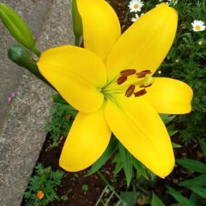 『 花開き 自然は今も 変わりなく 』自然川柳