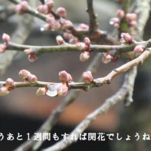「元気・スマイルウォーク坂本八幡宮~大宰府天満宮へ」下見ウォーク