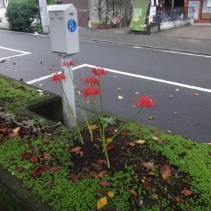 散歩道の彼岸花