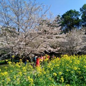 蘇州 蘇州の春 上方山森林公園 石湖など