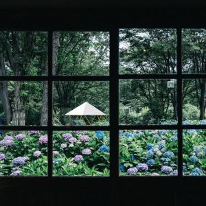 フォレストドームのある風景〜窓越しに見る紫陽花の向こうにフォレストドーム