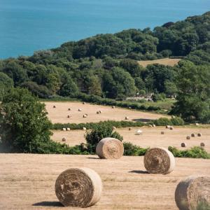 フォレストドームのある風景〜持続可能な農業の風景