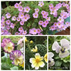庭のお花達とのんたん