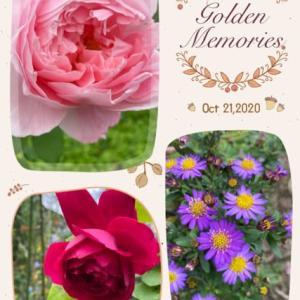 庭のお花達 秋薔薇他