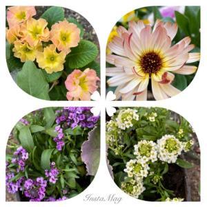 庭のお花達 カレンデュラ他