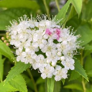 庭のお花達