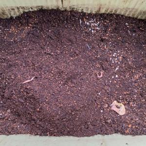 「ミミズが土壌改良‼️」