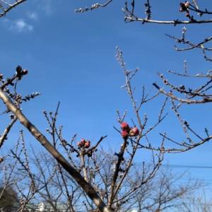 「春、、、、季節が移り変わる」