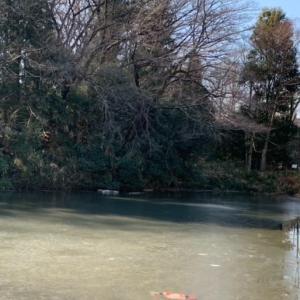 「氷張る姿見の池」