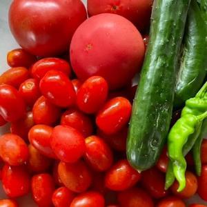 「トマト豊作❣️」