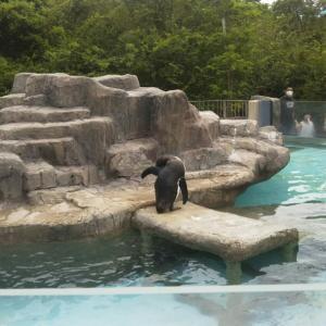 ペンギンさん@熊本市動植物園