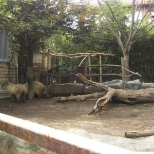 カピバラさん@熊本市動植物園