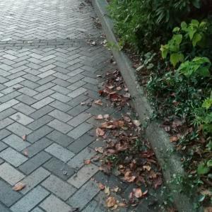 母校、ルーテル学院(旧 九州女学院)のお隣の「きなせん」の坂を下りてすぐのからあげ屋さん。