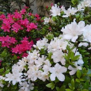 ☆☆ お庭のお花たち ☆☆