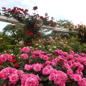 ☆ 春の薔薇を見に その1 ☆